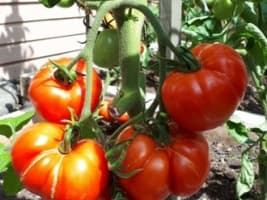 Now Trending: How to Start Your Own At-Home Garden