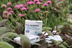 New Generic Sildenafil: What Does It Mean for You?